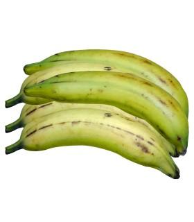 Plátano macho (5 plátanos)